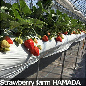 Strawberry farm HAMADA