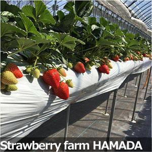 Strawberry farm HAMADA