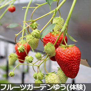 フルーツガーデンゆう(体験)